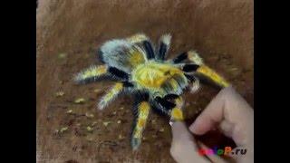 Как рисовать паука пастелью
