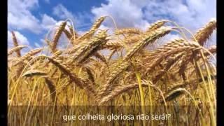 É O TEMPO DE SEGAR / HC 224 - Nascimento Silva