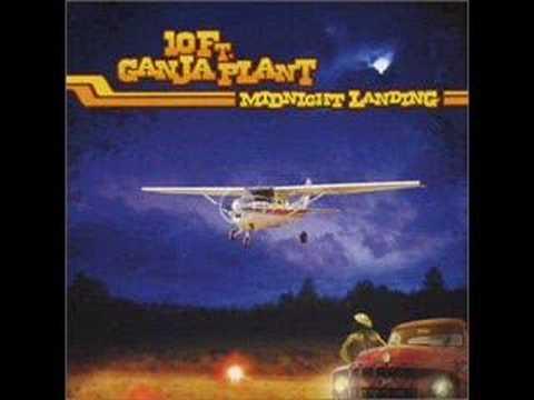 10-ft-ganja-plant-midnight-landing-tigerfcna