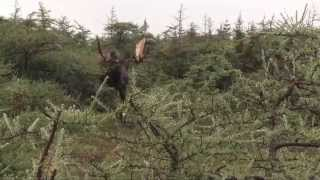 Moose on the Loose- Winchester Deadly Passion Web Promo