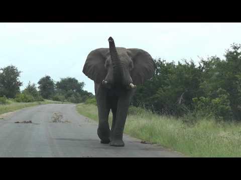 Gills first Elephant