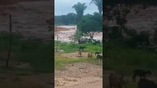 Enchente causa destruição em município do Piauí