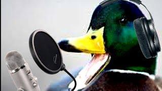 ASMR no talking duck edition