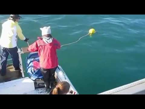 Bait-roping in Mossel Bay, South Africa