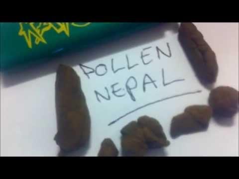 Pollen Nepal Hashish Amsterdam October 2011