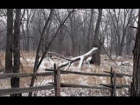 woodpigeon-oberkampf-nubbs