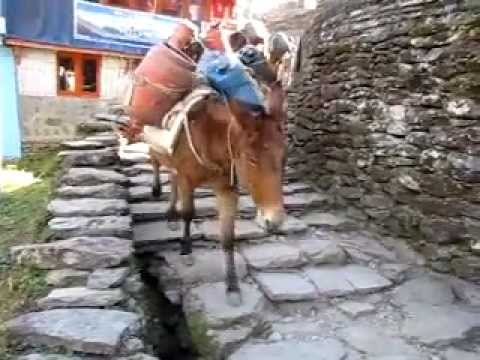Nepal Trip: Donkey Train