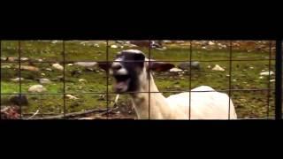 Grafa & Bobo feat. Pechenkata - Dim Da Me Niama (Goat Edition)
