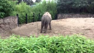 Twerking elephant