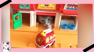 Funny Cats React To Toy And Video Game|| Funny Baby and Pet
