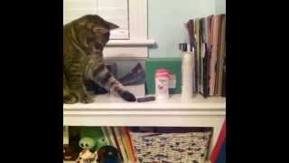 Why the room is always a mess VINE ~ Best  vines on the web!