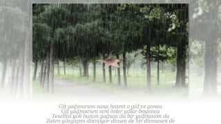 MEHMET ÖZKAYA Yağma Yağmur