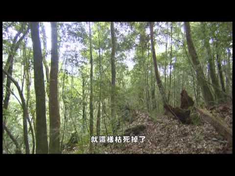 世界遺產-台灣檜木 - YouTube