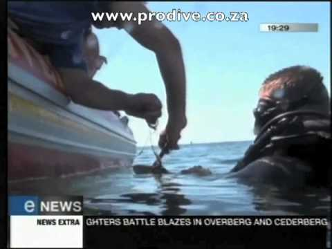 Pro Dive South Africa Saves a Shark ENews Interview