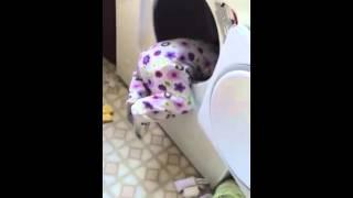 La bebé en la secadora