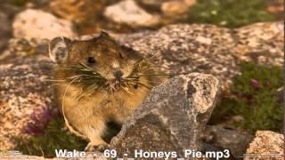 Wake     Honeys Pie