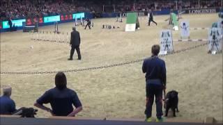 Olympia ABC Agility Final 2016