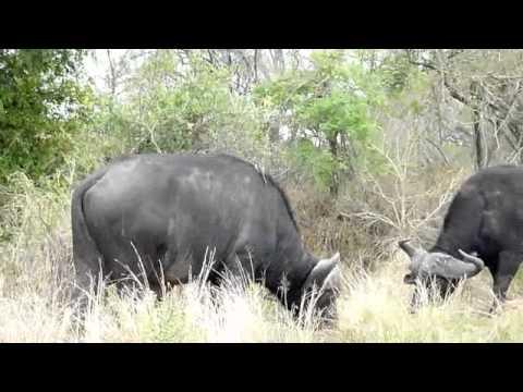 South Africa Kruger Nationalpark