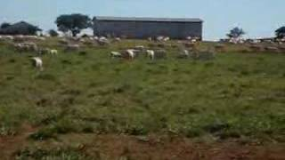 Leilão Fazenda Soebe 4