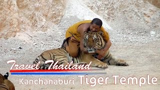 Travel Thailand Kachanaburi Tiger Temple Walk With Tigers and Pet them