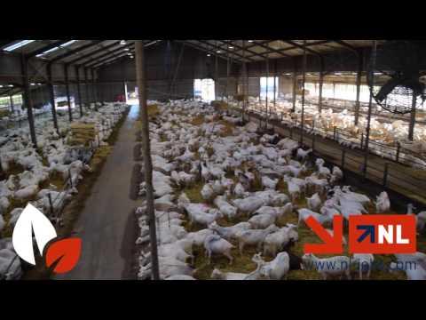 NL Jobs Promo photo