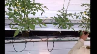 Sistema hidropónico NGS (New Growing System) y sustratos hidropónicos OASIS EASY PLANT®
