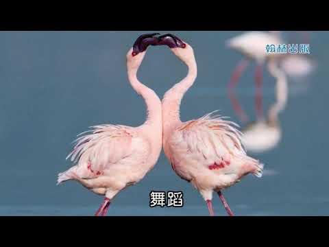 44 動物大觀園─複習篇 - YouTube