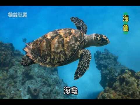 國小_自然_水生生物的世界─複習篇【翰林出版_四上_第二單元 水生生物的世界】 - YouTube