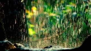 Sunetul ploii la Bogdan - Az eső hangja Bogdánban