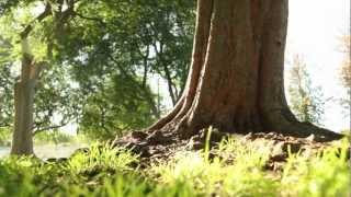 TreePeople - How a Tree Works
