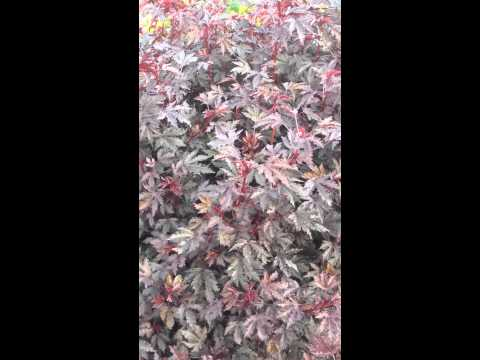 Högresta sommarplantor