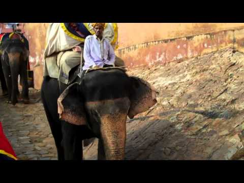Elephant Ride at Amber Fort, Jaipur, Rajastan, India