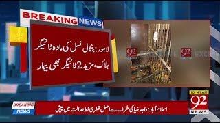 Bengali tigress dies at Lahore zoo - 16 March 2018 - 92NewsHDPlus