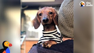 Watch This Little Dog Make The Craziest Recovery - NOODLES   The Dodo