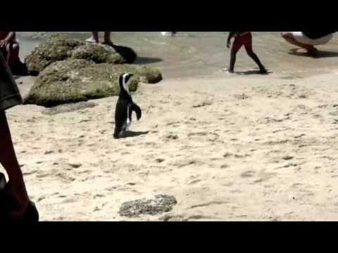 Penguint at the beach!