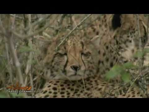 Needles Lodge Accommodation Marloth Park Mpumalanga South Africa – Visit Africa Travel Channel