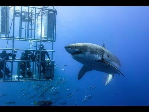 Shark Cage Diving, South Africa