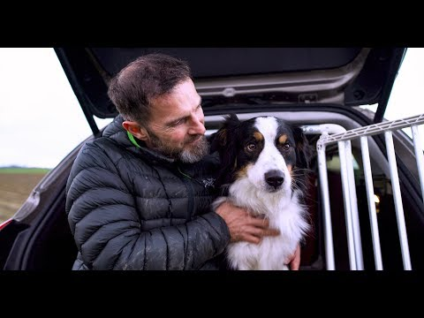 The dog that helped to design a car