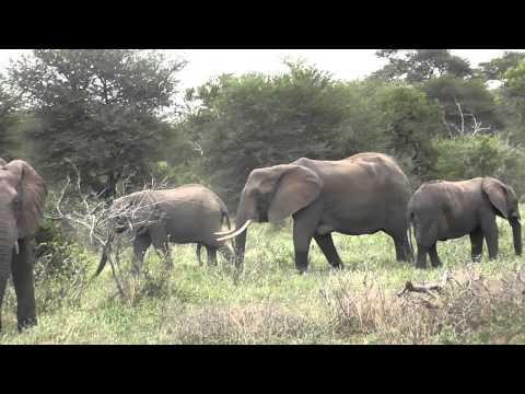 elephants,  Kruger, South Africa