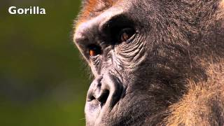 Jungle Animal Sounds for Kids
