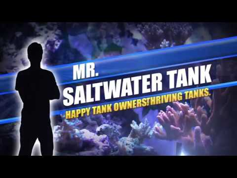 Mr. Saltwater Tank Tours World Wide Corals