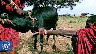 Way of Life of Maasai Tribe