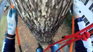 Tree Climbing with Spikes and Climbing Line
