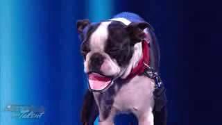 Dog Ventriloquist Todd Oliver Americas Got Talent Wild Card Show Voonathaa - 2017
