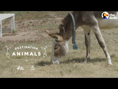 Snuggle With Rescue Donkeys While They Look For Their Forever Homes | The Dodo Airbnb Experiences