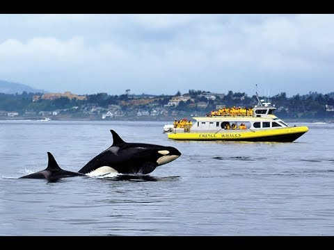 WHALE WATCHING IN VANCOUVER AMAZING FOOTAGE