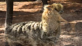 Garlyn Zoo - Naubinway, MI (Upper Peninsula) - YouTube