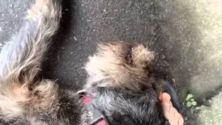 Hond huilt bij weerzien