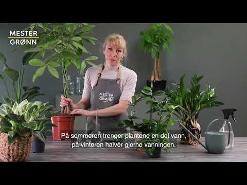 Slik steller du grønne planter