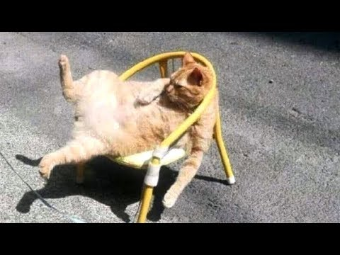 Is this the FUNNIEST CAT COMPILATION? YEEES! - SCREAM & CRY with LAUGHTER NOW!